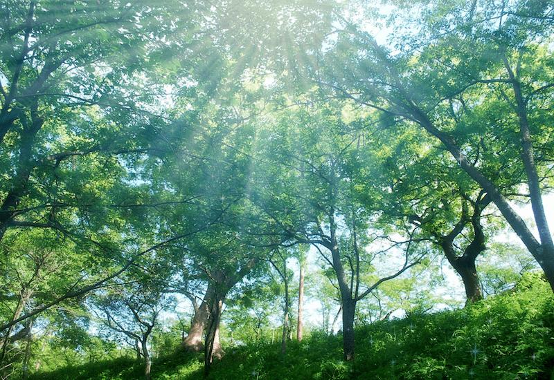 新緑に刺す朝日・光