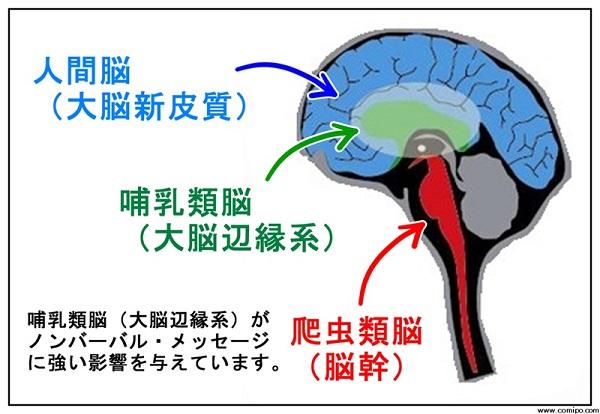 脳の分類を習う