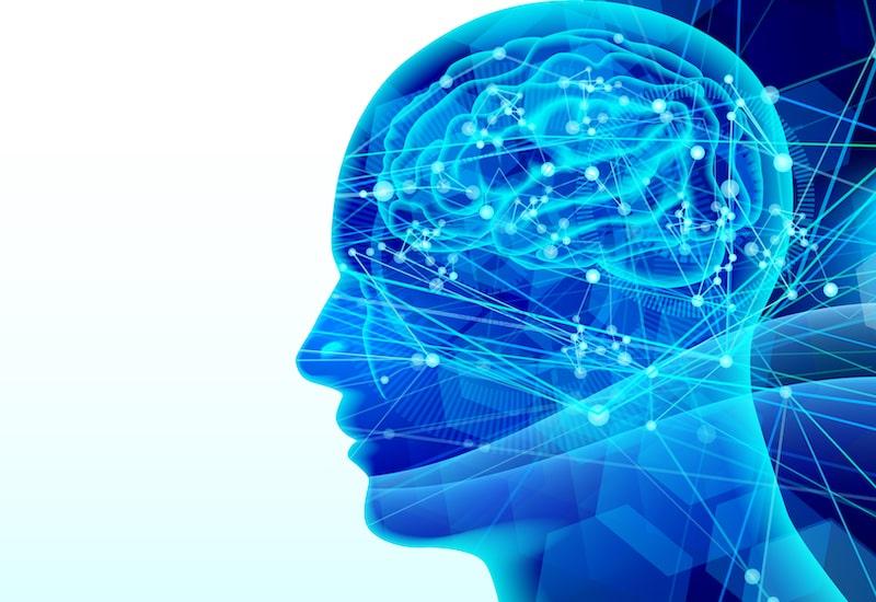 五感・脳神経イメージ