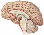脳とビタミンB群の関係