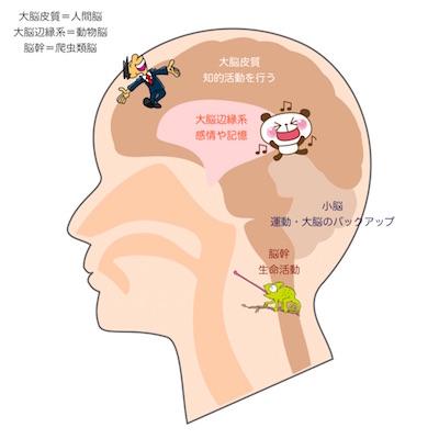3つの脳を上手に使って幸せ+