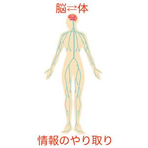 人体・神経・リンパ