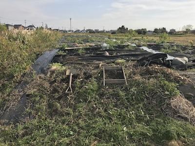 無農薬ばたけの開墾