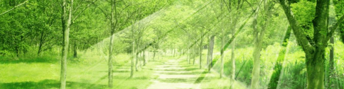 森の小道1450