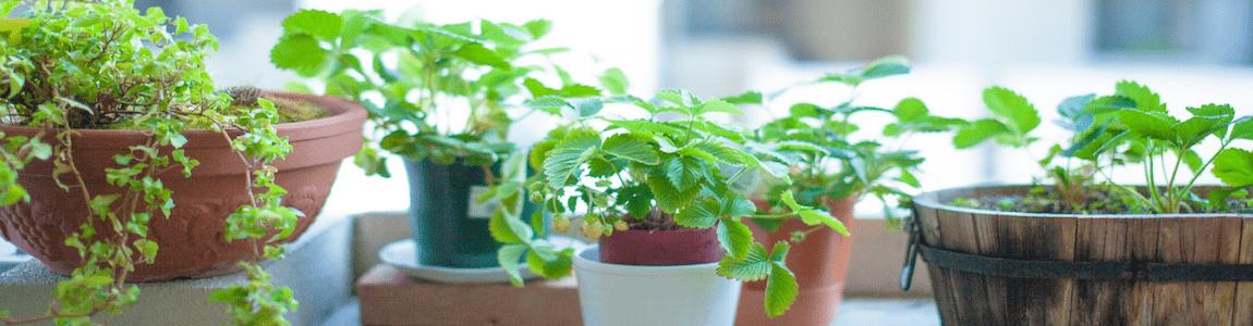 窓辺の植物バナー